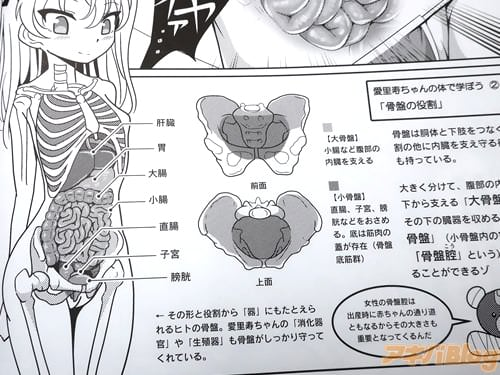特殊なカメラで筋肉・内臓・骨を観察「骨盤腔は出産時に赤ちゃんの通り道ともなるからその大きさも重要となってくるんだ」