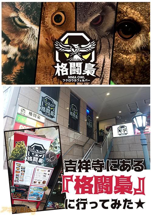 フクロウカフェ&バー「格闘梟」はヨドバシカメラの真裏にあるという好立地!!